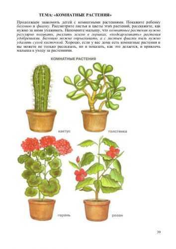 ᐈ кубышка желтая растение: [фото и описание] где растет, как выглядит