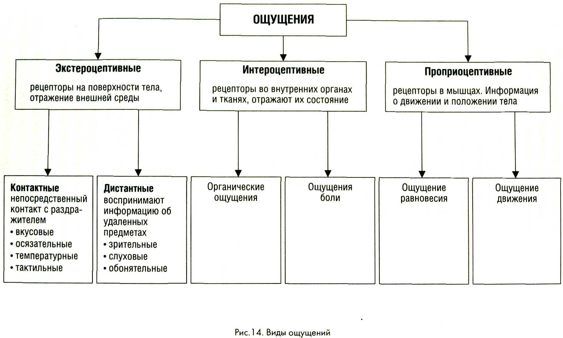 Что такое сенсибилизация, и как сенсибилизация используется в аллергологии?