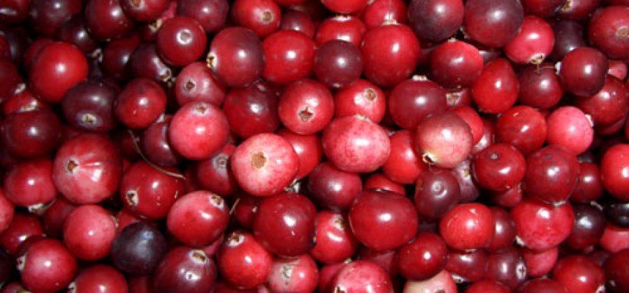 Клюква (63 фото): полезные и лечебные свойства, противопоказания ягоды, чем полезна клюква, польза и вред для организма человека