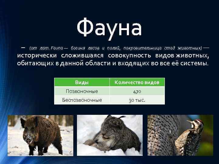 Что такое фауна