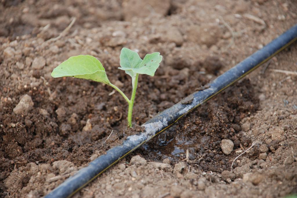 Орошение - это что значит? польза орошения для земли