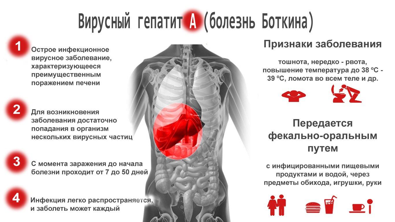 Гепатит б: что это такое, как передается и чем лечить?