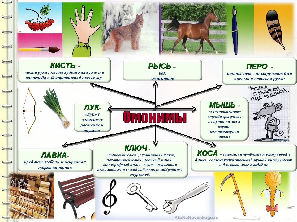 Что такое омонимы в русском языке: примеры предложений и таблица с разновидностями