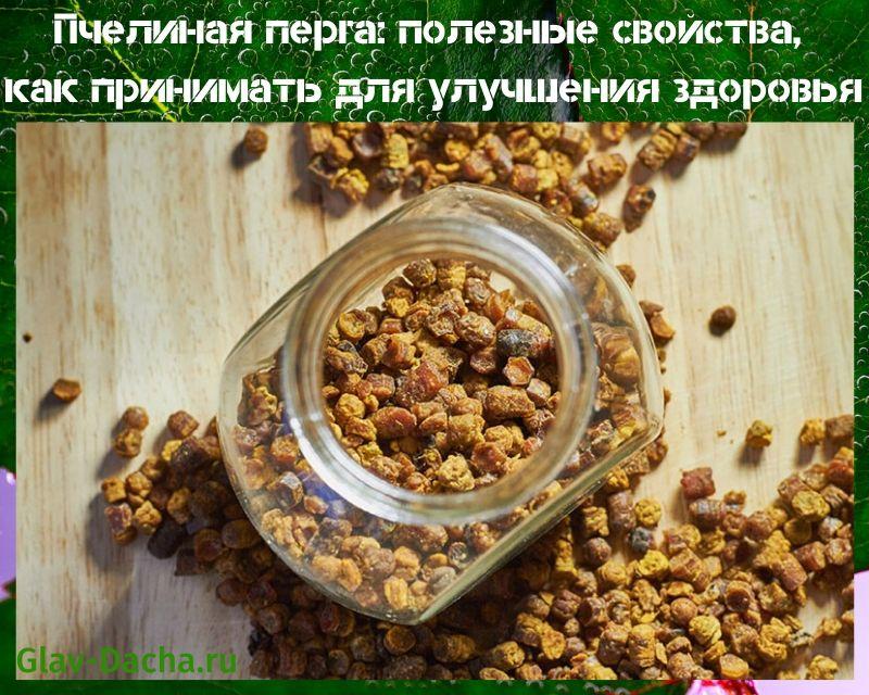 Пчелиная перга: полезные свойства и как принимать?