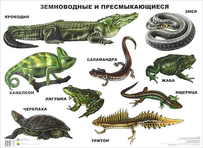 Сколько видов пресмыкающихся на земле: описание пресмыкающихся животных, список названий | tvercult.ru