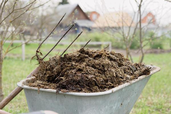 Коровяк как удобрение: химический состав, способы приготовить и применять коровий навоз в огороде, в т.ч. как развести свежий материал для подкормки растений