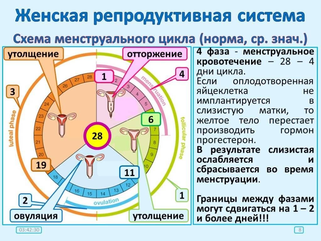 Как считать цикл месячных