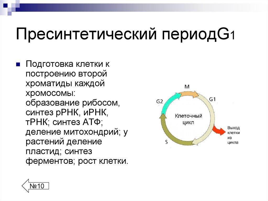 Жизненный цикл клетки: фазы, периоды. жизненный цикл вируса в клетке хозяина