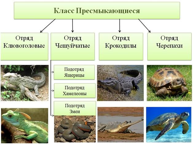 Пресмыкающиеся или рептилии — знаешь как