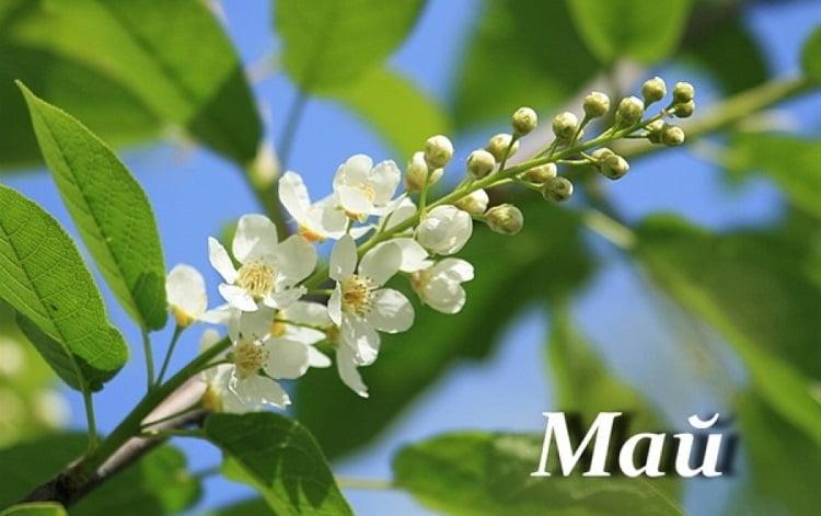Происхождение, характеристика и значение имени май