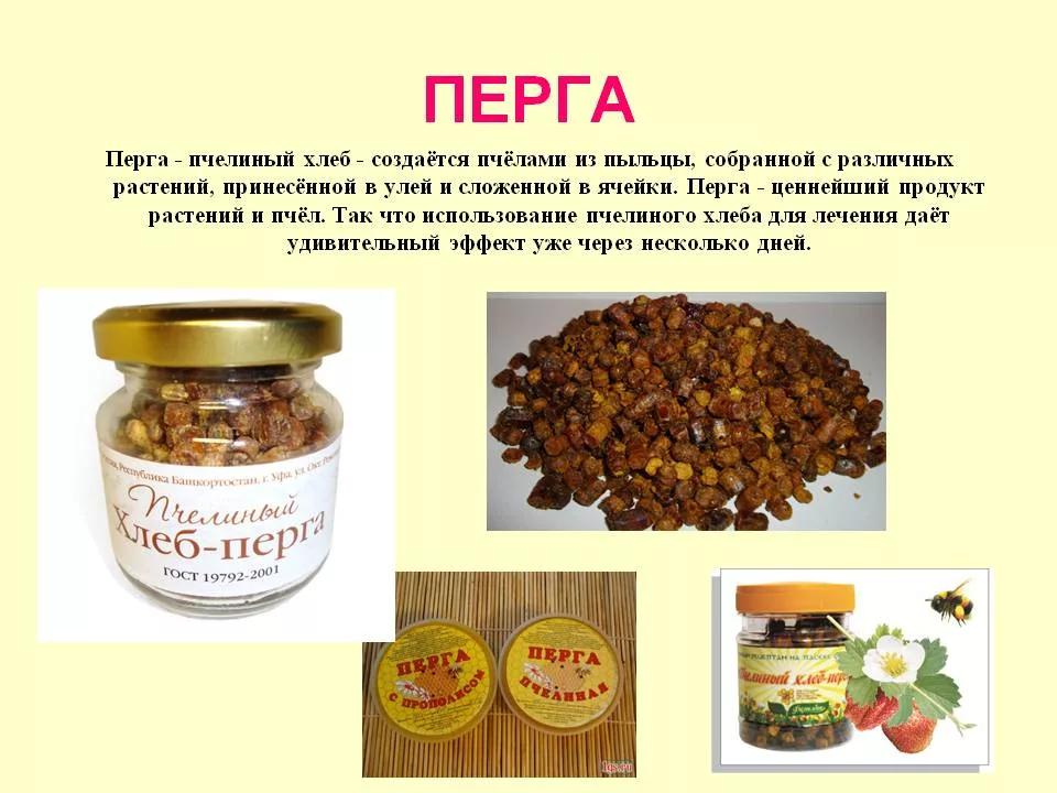 Перга пчелиная: полезные свойства и противопоказания для здоровья