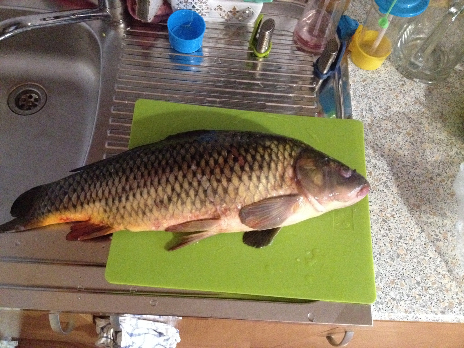Рыба сазан: описание, разновидности, особенности питания