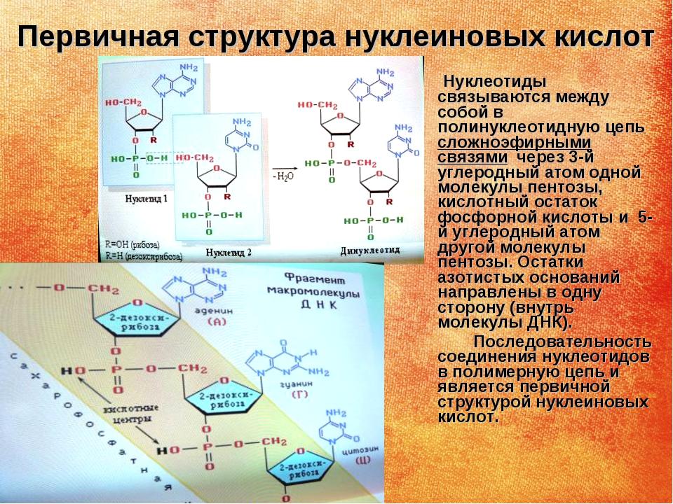 Нуклеиновая кислота википедия