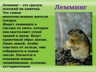 Боевые лемминги — posmotre.li