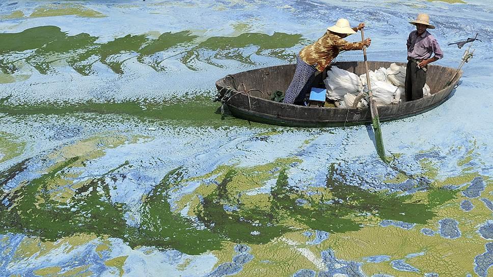 Экологический кризис — википедия. что такое экологический кризис