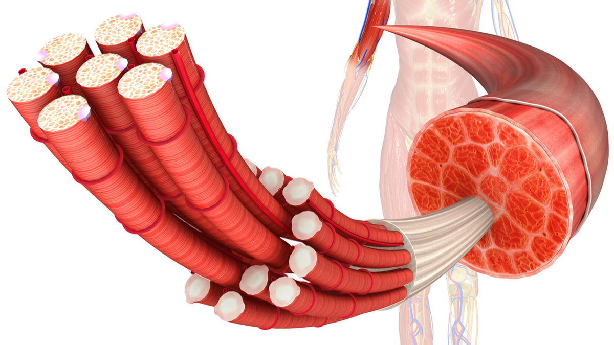 Боли в мышцах: что такое молочная кислота, как вывести