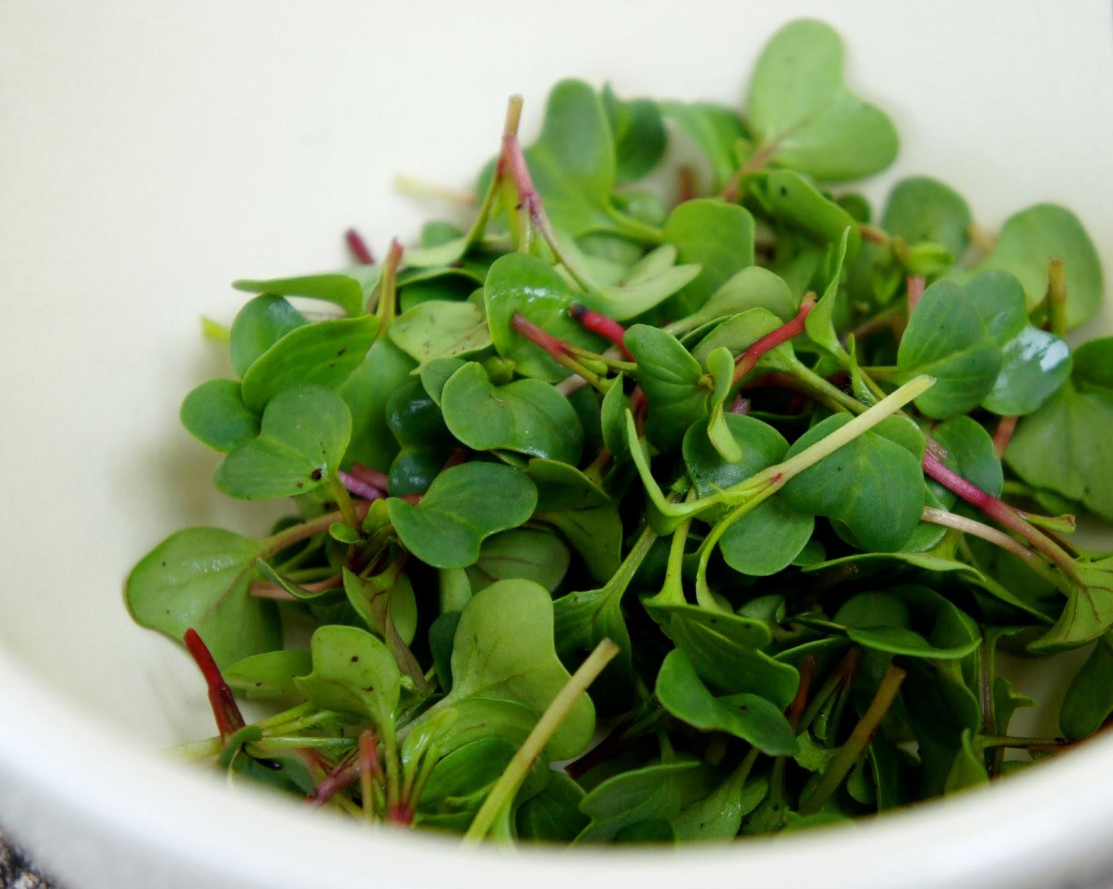 Бизнес идея выращивание микрозелени с расчетами