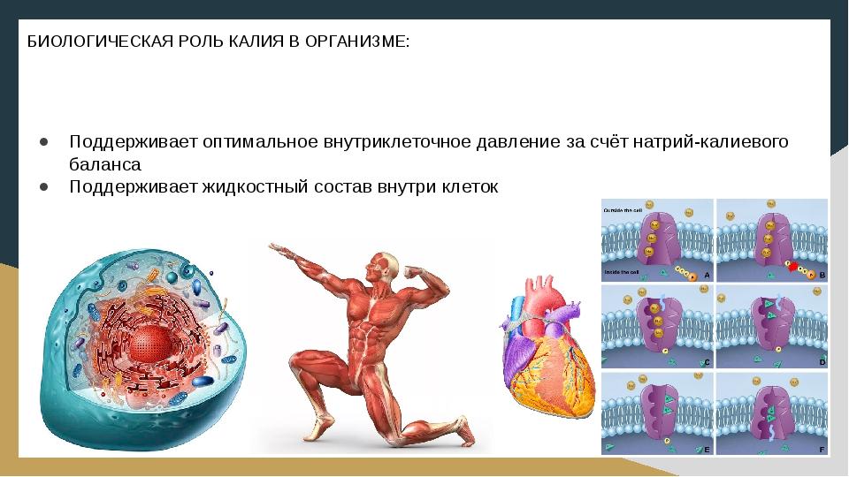 Калий в организме человека. норма, препараты, в продуктах