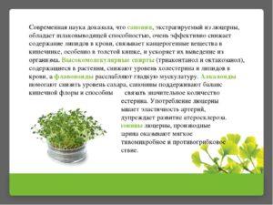 Люцерна серповидная — полезные свойства, описание
