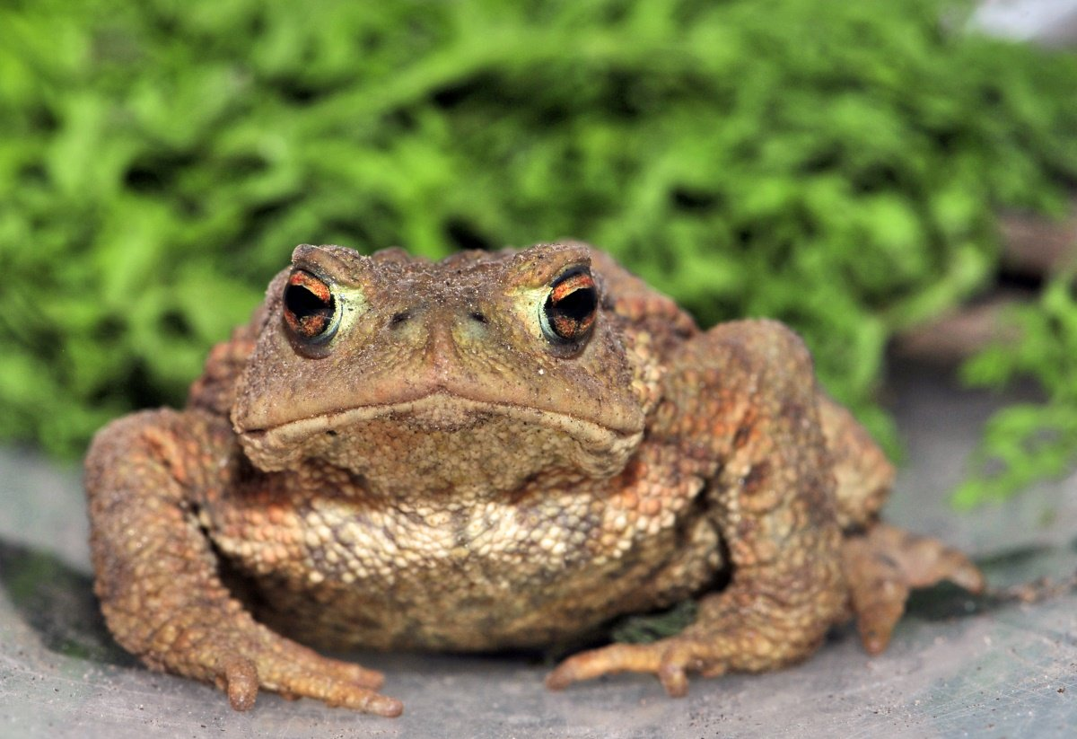 Лягушка: образ жизни,описание,размножение,виды,внешний вид,фото