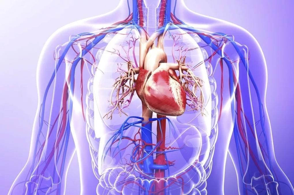 Лечим аритмию в домашних условиях | лечение сердца