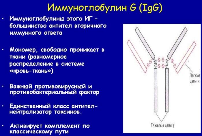Применение иммуноглобулина - показания и противопоказания