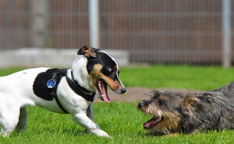 Течка у собак - продолжительность, когда начинается, сколько длится, как часто бывает, как проходит