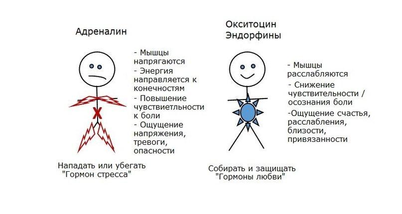 Биохимия счастья (часть 3). окситоцин— таинственный гормон любви, доверия и морали. что это такое и как работает