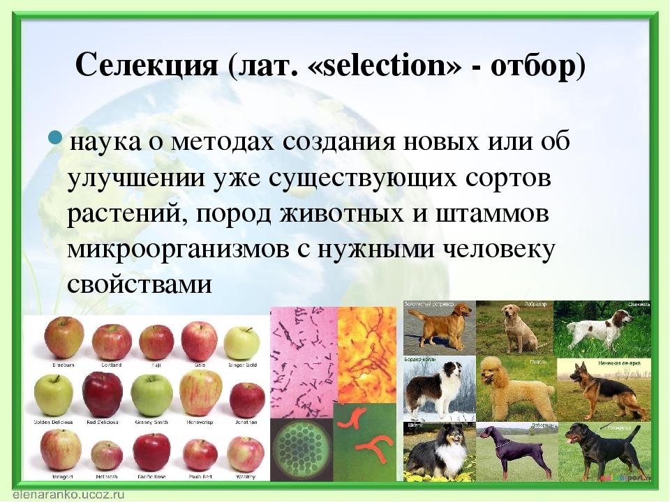 Лекция 25. основы селекции