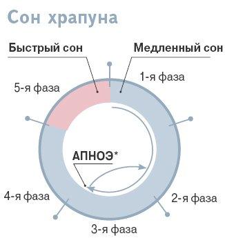Соотношение и длительность фаз медленного и быстрого сна у здорового человека