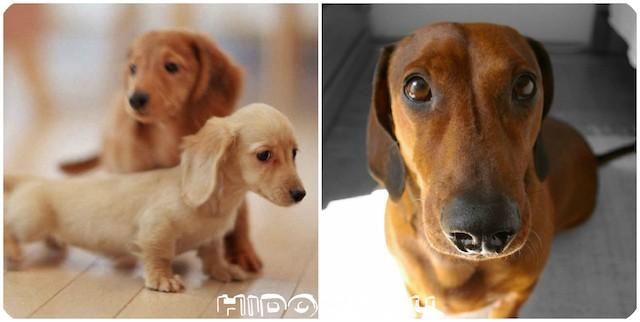 Основные сведения о периоде течки у собаки: сколько длится, как ухаживать