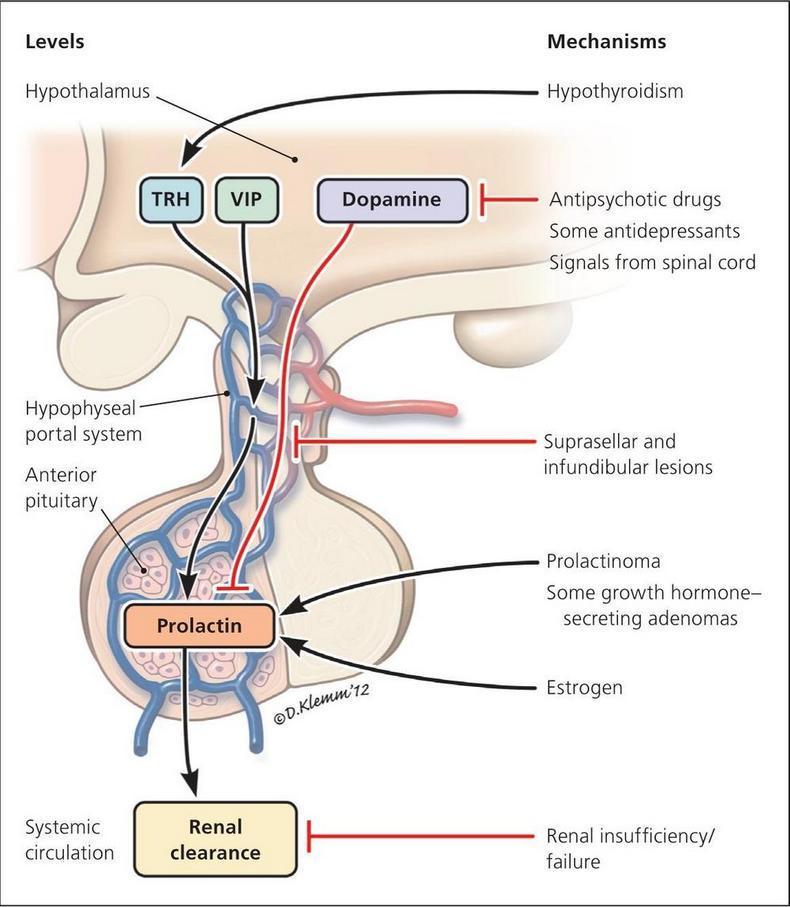 Гормон окситоцин (гормон любви): что это и как его повысить
