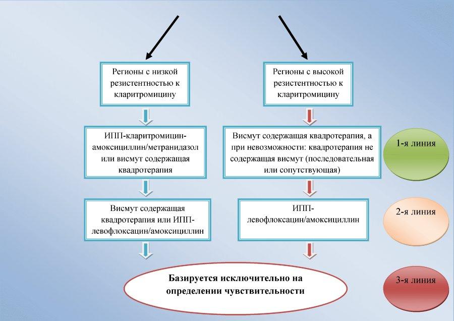 Эрадикация helicobacter pylori что это такое | tsitologiya.su