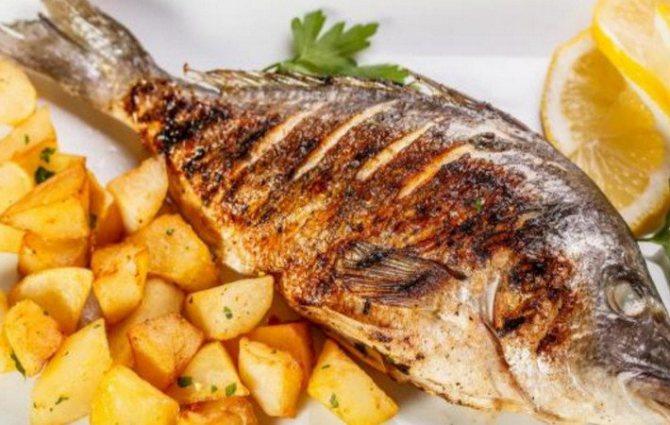 Рыба сибас: польза и вред, где водится, химический состав, сколько калорий, можно ли детям