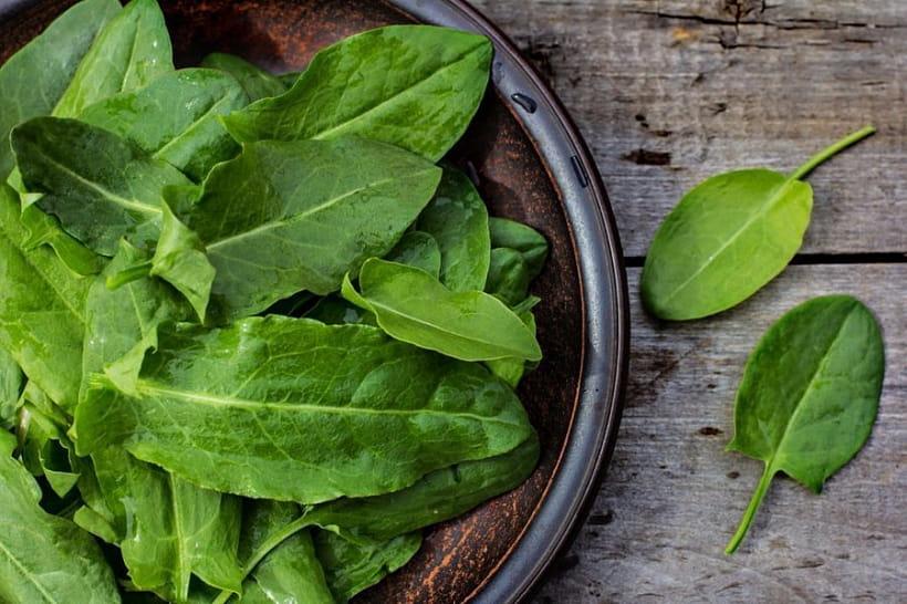 Щавель: полезные свойства растения и применение