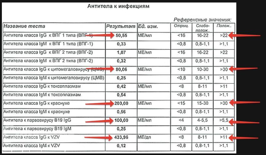 Высокое содержание антител в крови. антитела в крови: что это такое и какова их норма