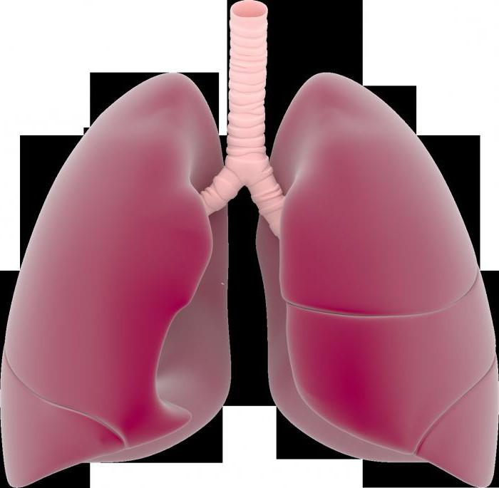 Плеврит легких: симптомы и лечение. чем лечить плеврит