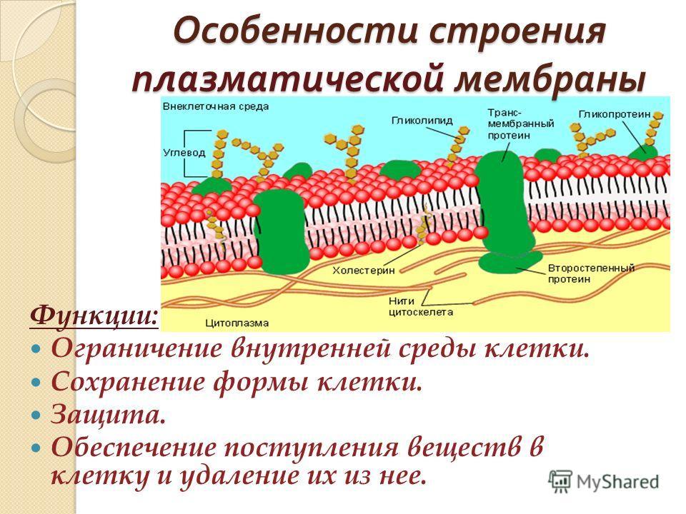 Трековая мембрана — википедия. что такое трековая мембрана