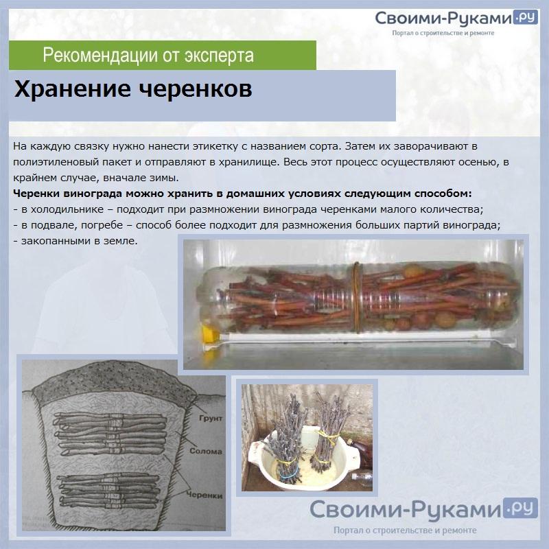Черенок - это что такое? условия для укоренения черенков, их заготовка и хранение
