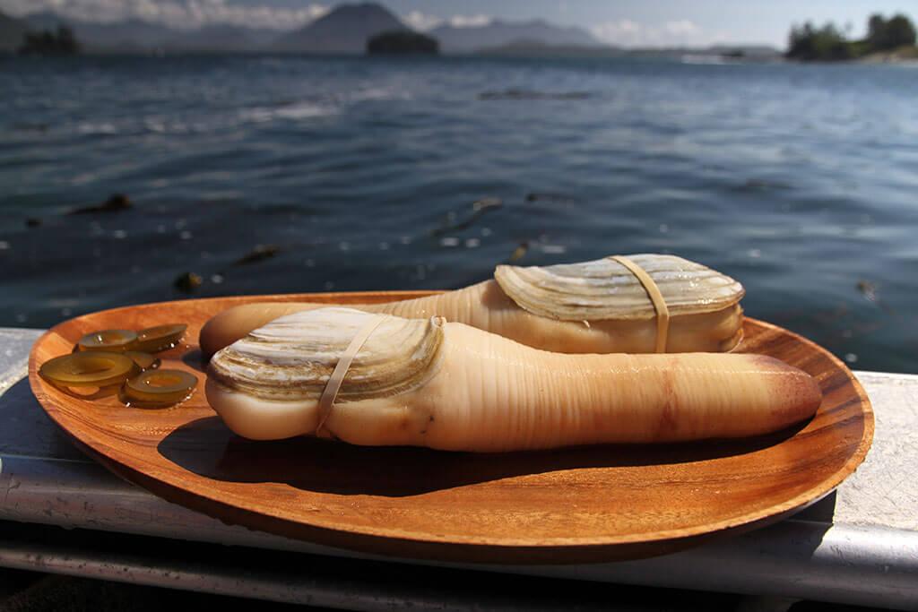 Гуидак: бесстыжий моллюск-эксгибиционист