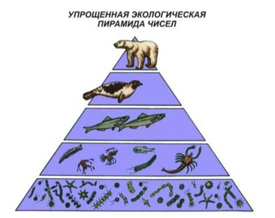 Что такое экологическая пирамида? какие процессы в сообществе она отражает? - универ soloby