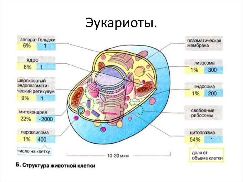Мир дикой природы на wwlife.ru - эукариоты (eucaryota)