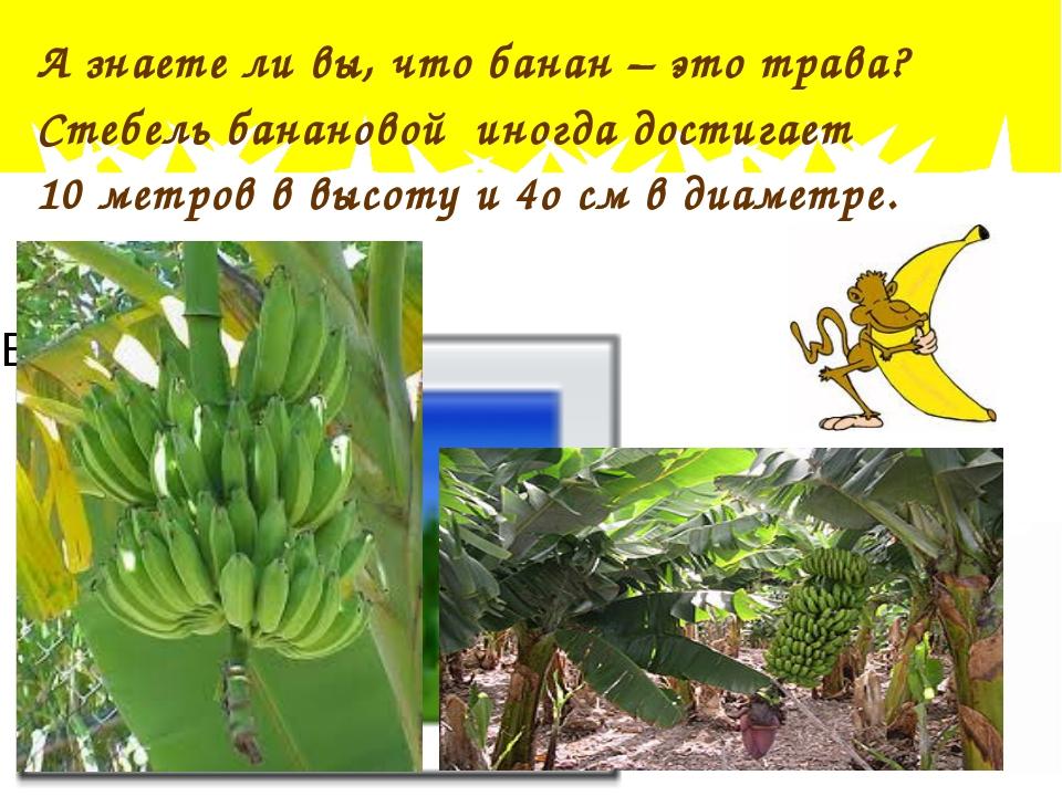 Что такое банан фрукт или ягода — ягоды грибы
