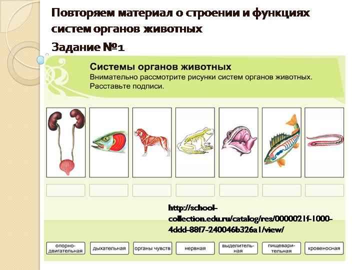 Анатомия человека: системы организма