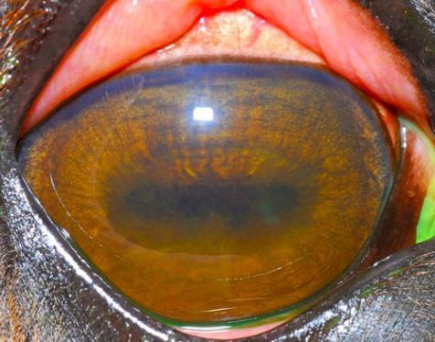 Что такое колобома радужки глаза? как лечить патологию?