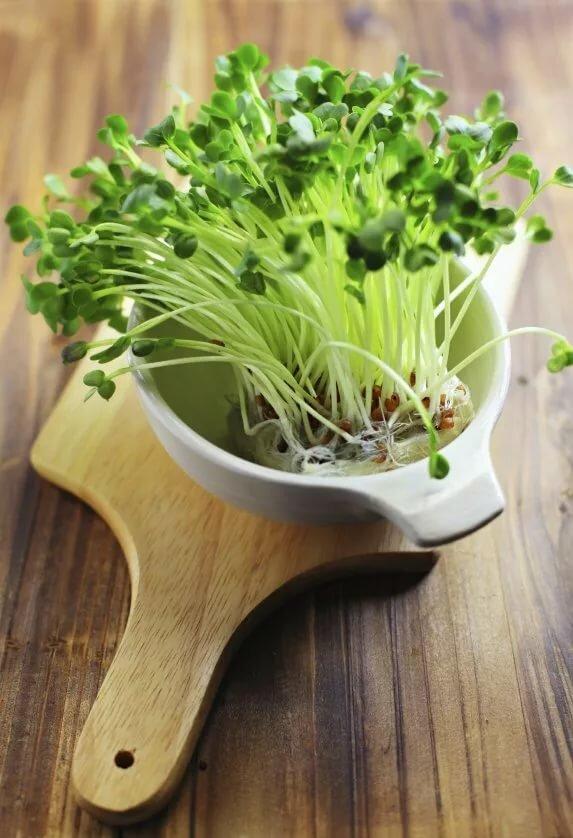 Микрозелень в домашних условиях: польза и способы выращивания