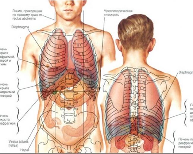 Организм — википедия. что такое организм