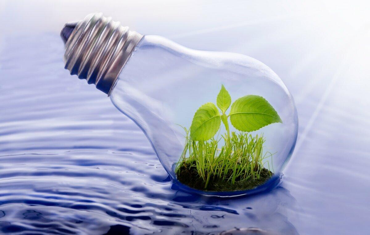 Экология: история развития, законы и задачи. влияние экологии на человека
