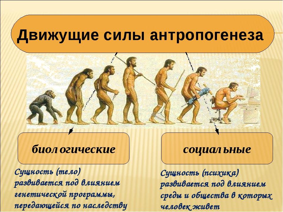 Эволюция что это? значение слова эволюция