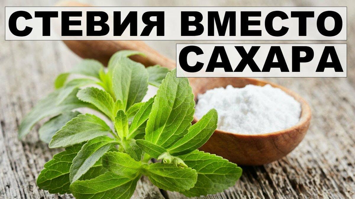 Стевия (заменитель сахара) — польза и вред, отзывы